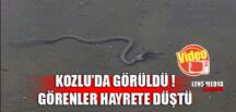 KOZLU'DA GÖRÜLDÜ!