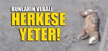 BUNLARIN VEBALİ HERKESE YETER!