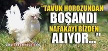 """""""HOROZUNDAN BOŞANMIŞ NAFAKAYI BİZDEN ALIYOR"""""""